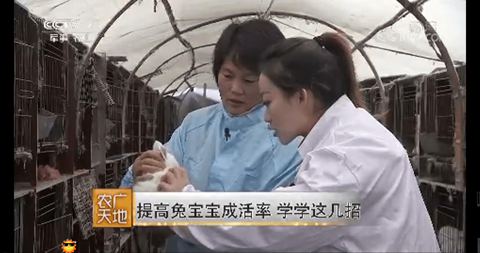 中国网络电视台-[农广天地]提高兔宝宝成活率 学学这几招