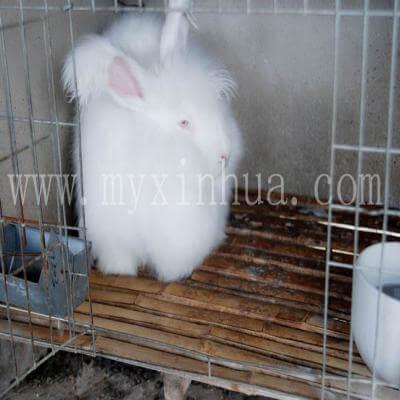 长毛兔种兔在北方有哪几种养殖饲养方式?