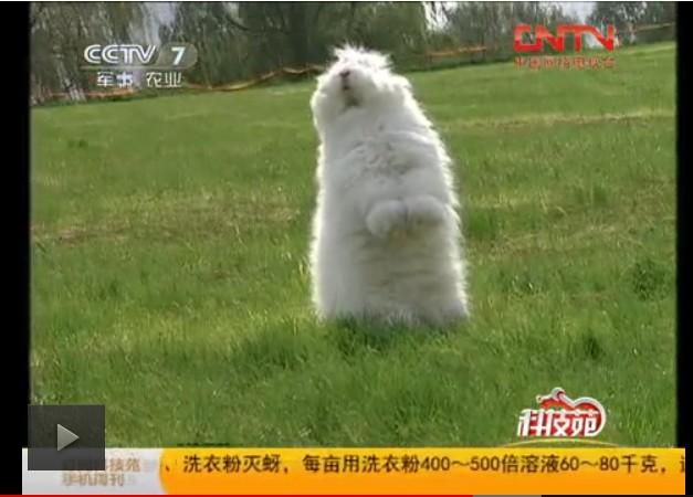 蒙阴县鑫华种兔场欢迎您
